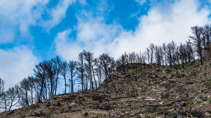 Balearic Island Majorca after forest fire. Serra de Tramuntana mountain view with burnt trees for nature concept website