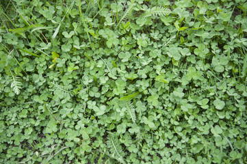 green clovers textured background