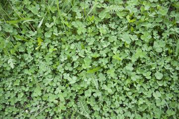 green clovers textured background