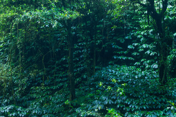 tropical rain forest, green wall background