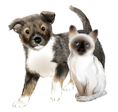 portrait of the  cute puppy and thai kitten. Cat and dog are friends.