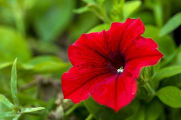 Red flower in grass