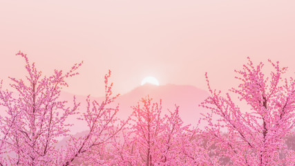 Sakura Cherry Blossom tree before sunset behiind the mountain , japan