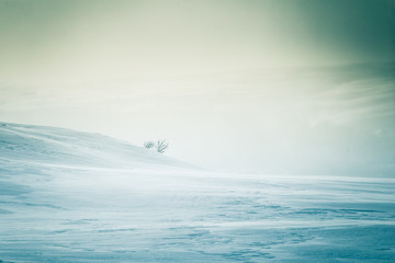 A beautiful, artistic, minimalist landscape with a lot of snow in the Norwegian winter