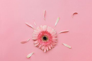 Pink Gerbera flower on pastel tone background