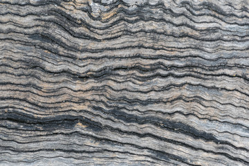 Old wood texture. Natural background