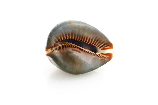 seashell massage on a white background