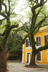 Yellow house and moss covered tree