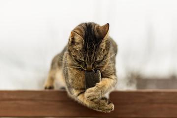 Eine kleine Katze spielt im Garten