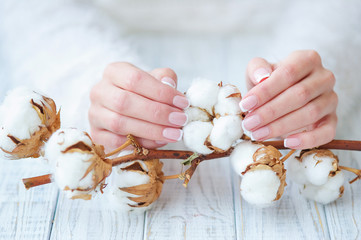 Woman hands with beautiful French manicure holding delicate white cotton flower