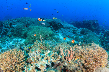 Healthy tropical coral reef