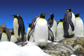 Pinguine in der Gruppe