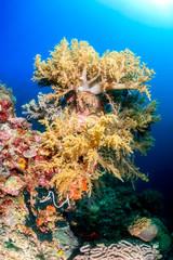 Soft corals, Pescador Island, Moalboal