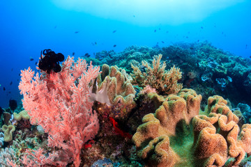 Colorful corals on a tropical reef