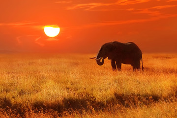 Elephant at sunset in the Serengeti National Park. Africa. Tanzania.
