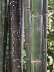 Bamboo Tree Detail