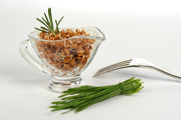 Sprouted Wheat in Glass Saucers on a White Background