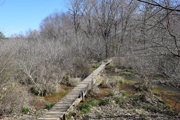 Footbridge across a stream in Wall Doxey State Park, Mississippi