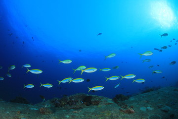 Underwater reef with fish and coral