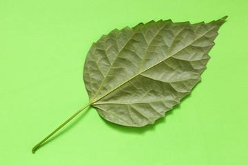 Зелёный лист растения на зелёном фоне
