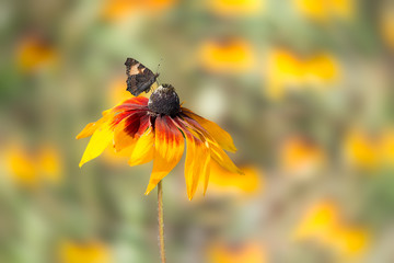 Butterfly on a flower, blurred background