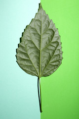 Зелёный лист растения на зелёном фоне разных оттенков