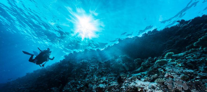 Rays of sunlight shining into sea, underwater view