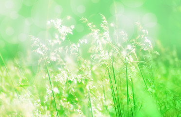 grass flower soft focus spring background