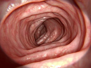 Healthy intestine, illustration
