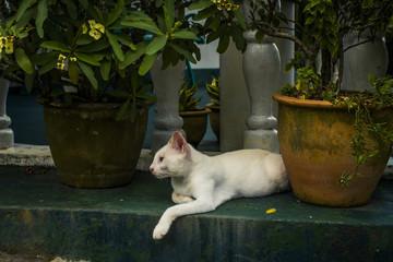 White cat relaxing