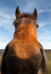 Funny horse with wild eyes