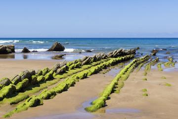 Green seaweed on rocky beach