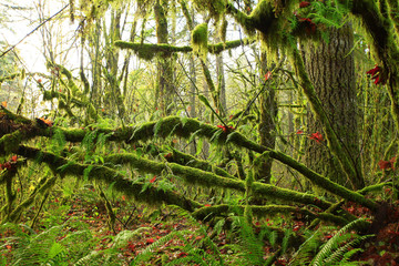 a picture of an exterior Pacific Northwest rainforest