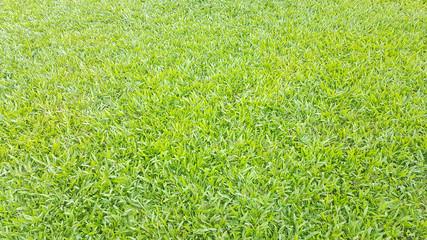 grass field landscape under the sunshine day