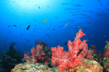 Coral reef and tropical fish underwater in ocean