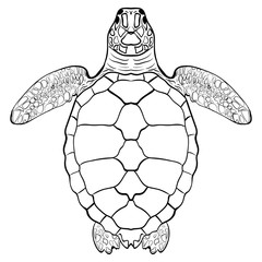Sea turtle. Hand drawn vector illustration