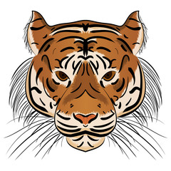 Vector illustration head ferocious tiger
