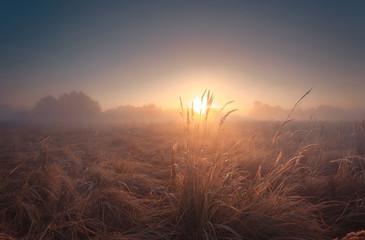 Beautiful misty sunrise landscape.  Foggy autumn field with high grass. Fototapete
