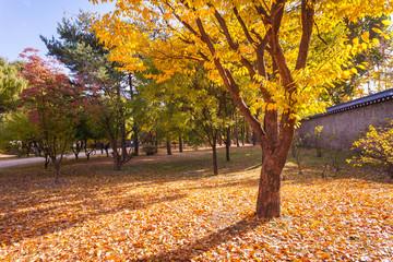 Autumn landscape in the park. Seoul,South korea.