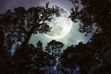 Wall Mural - Silhouette the branches of trees against night sky with full moon. Vintage tone.