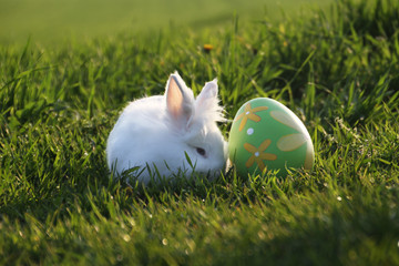 Easter white rabbit with egg