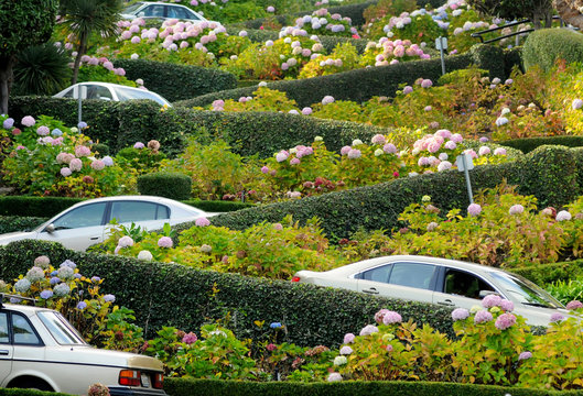 San Francisco, Lombard Street, one of the most famous landmark and the crookedest street in the world.