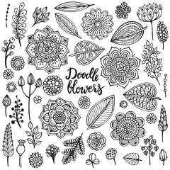 Big set of hand drawn vector flowers, branches, leaves