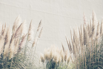 Summer background reed grasses, vintage wallpaper with high grass
