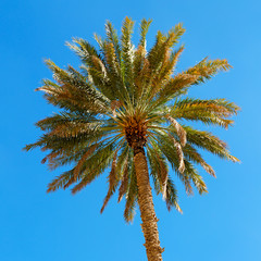in oman the palm and the clear sky