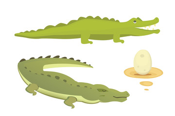Crocodile Cute Character set. Aligator vector cartoon illustration