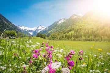 Allgäu - Wiese mit Frühlingsblumen und schneebedeckten Bergen im Hintergrund