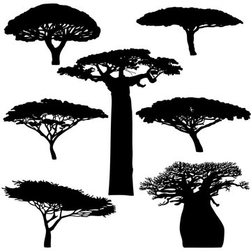 Black silhouette various of African trees on a white background - vector
