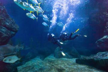 Foto auf Acrylglas Tauchen divers exploring fish underwater in the sea, beautiful diving background
