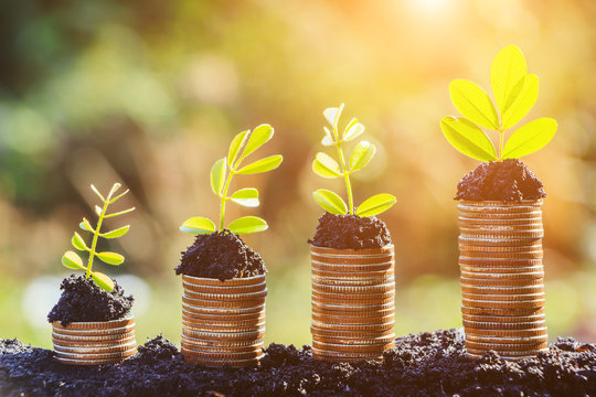 Growing plant on row of coin money , csr in business